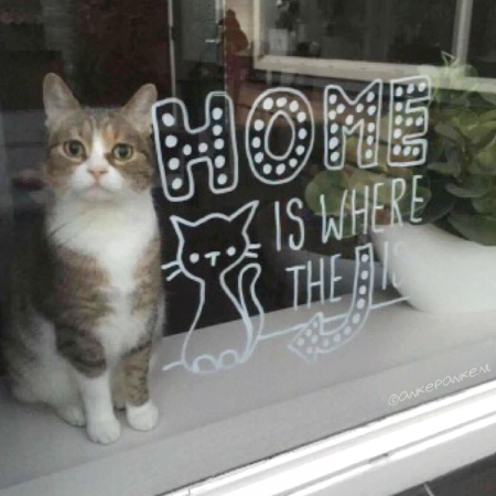 Home is where the cat is quote raamtekening